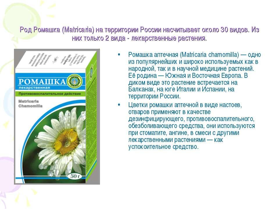 Ромашка: лечебные свойства и противопоказания