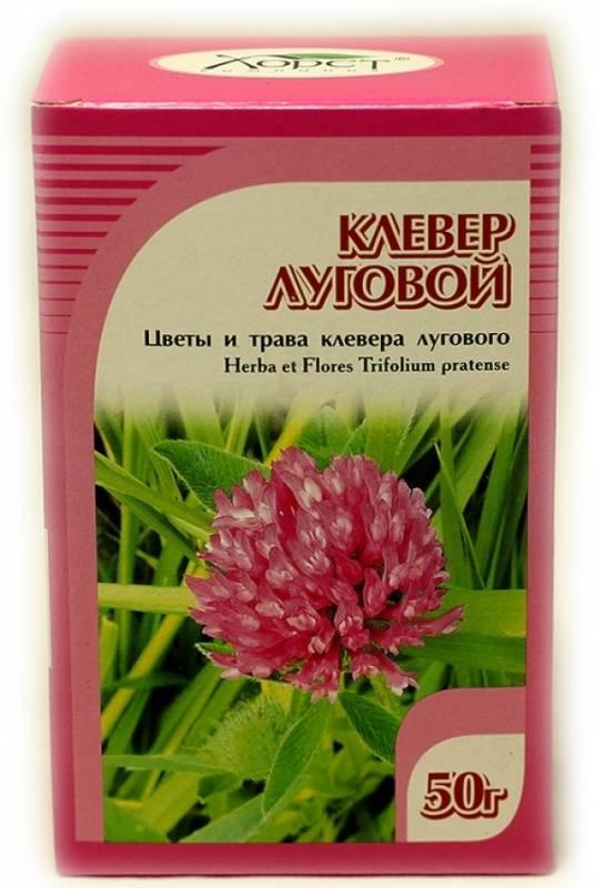 Красный клевер: лечебные свойства и применение