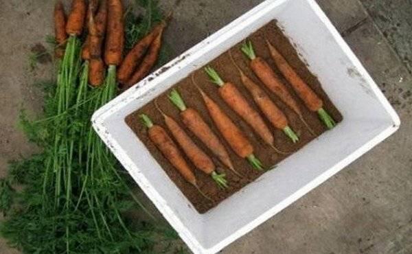 Как сушить морковь: на поджарку и в салат