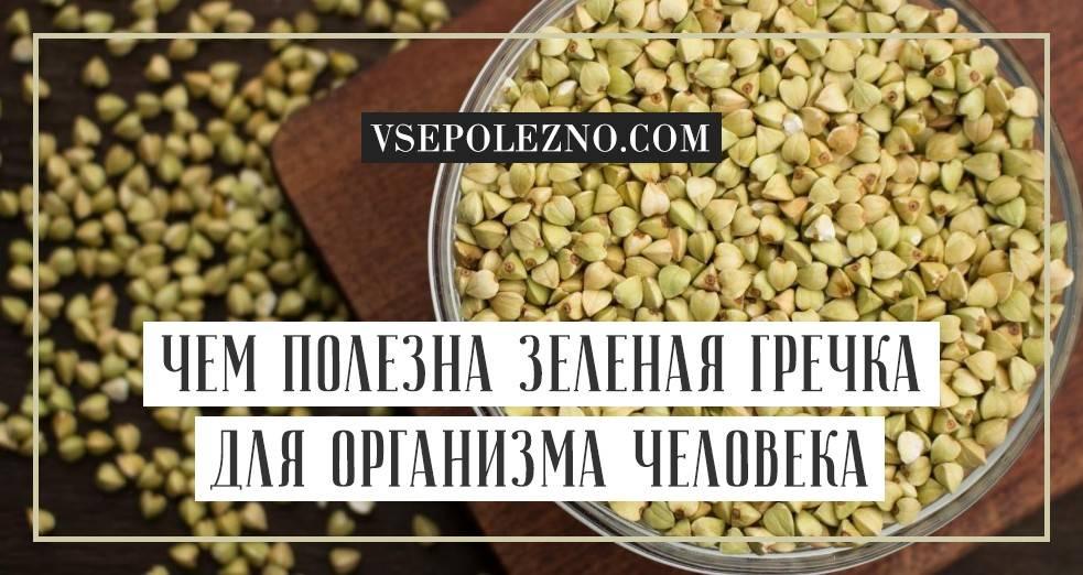 Польза для здоровья и противопоказания зеленой гречки