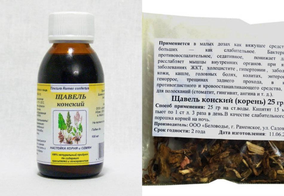 Щавель конский: лечебные свойства и противопоказания травы