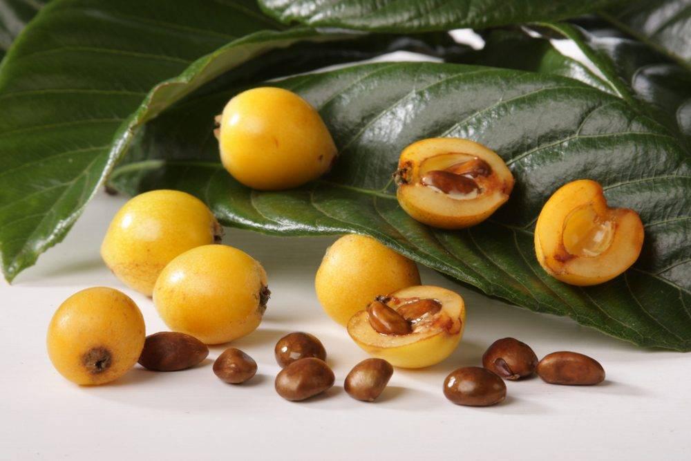 Мушмула обыкновенная (германская) — полезные свойства и противопоказания, состав, калорийность. как едят мушмулу, рецепты. как вырастить в домашних условиях