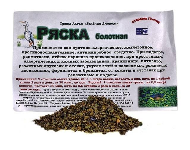 Ряска— полезные свойства, применение внародной медицине, противопоказания