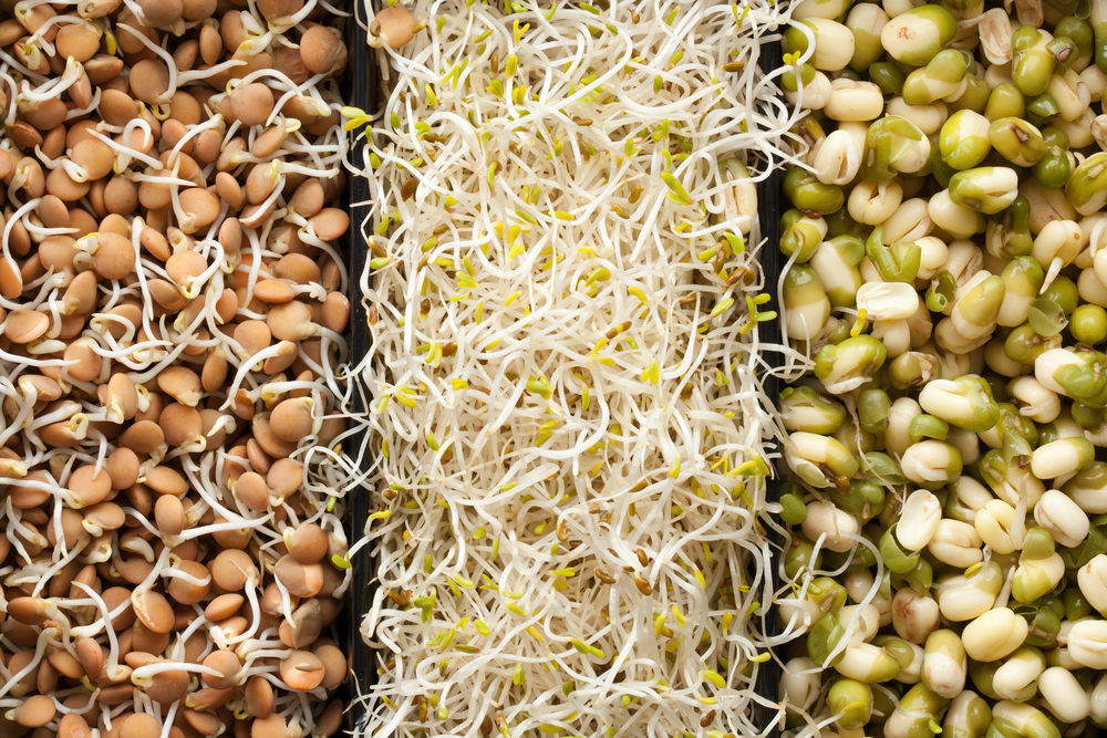 Как самостоятельно прорастить пшеницу в домашних условиях?
