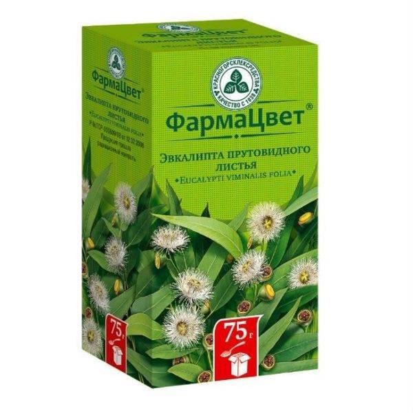 Используем эвкалипт в домашнем лечении