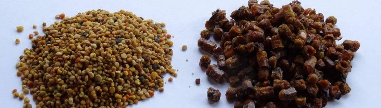 Пчелиная пыльца: польза и вред как принимать