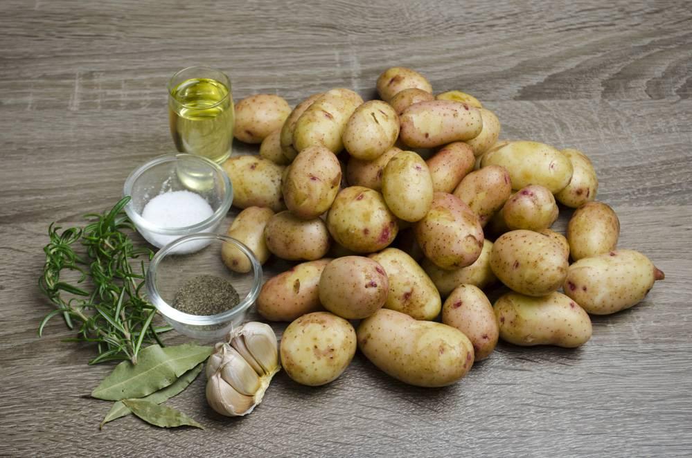 Полезные свойства картошки для здоровья человека