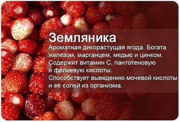 Полезные свойства ягод и плодов при болезнях желудочно-кишечного тракта, печени и желчных путей