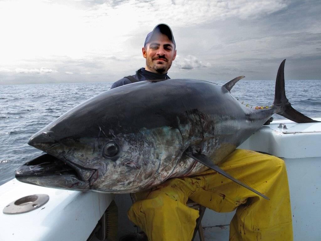 Польза и вред тунца. консервированный тунец: как балансировать пользу и вред