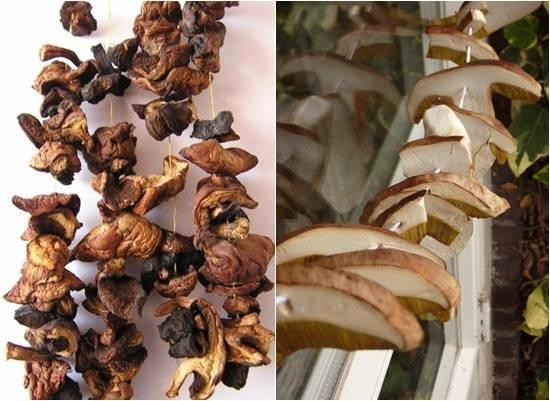 Как сушить грибы: выбор и подготовка грибов, способы сушки