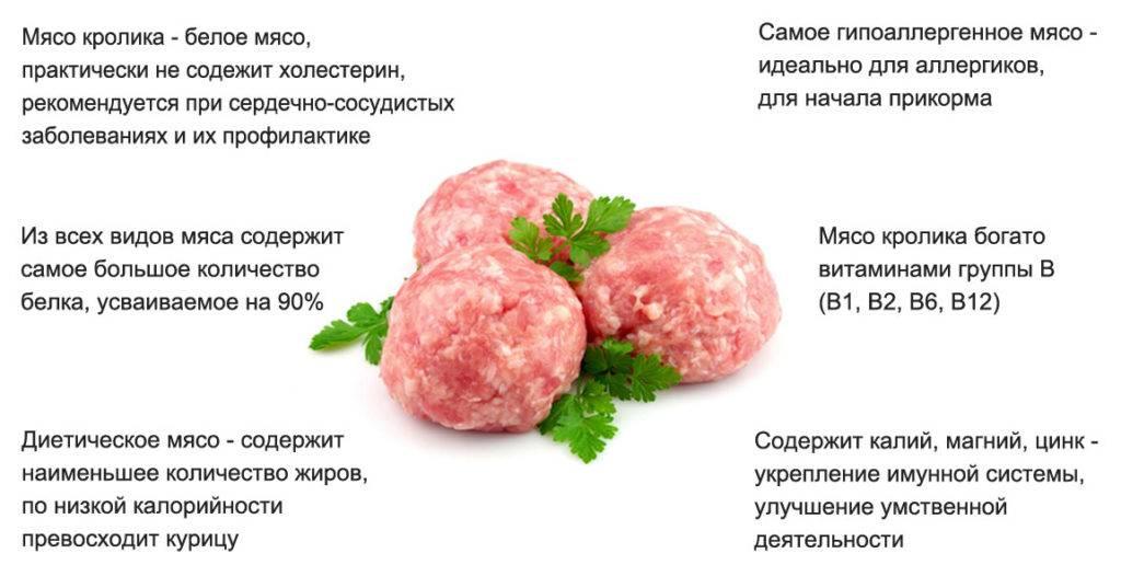 Польза мяса кролика и его вред: свойства, характеристики продукта и особенности правильного приготовления (135 фото)