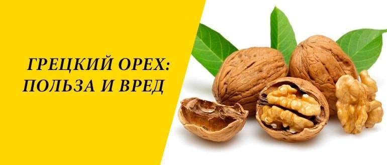 Ценнейшее масло грецкого ореха — состав и свойства древнего царского золота