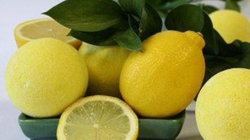 Лимонная корка: польза и вред для здоровья