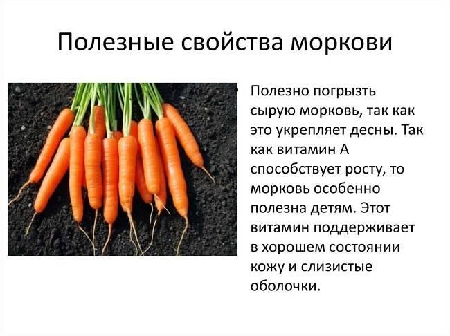 Морковь — польза и чем вредна для здоровья