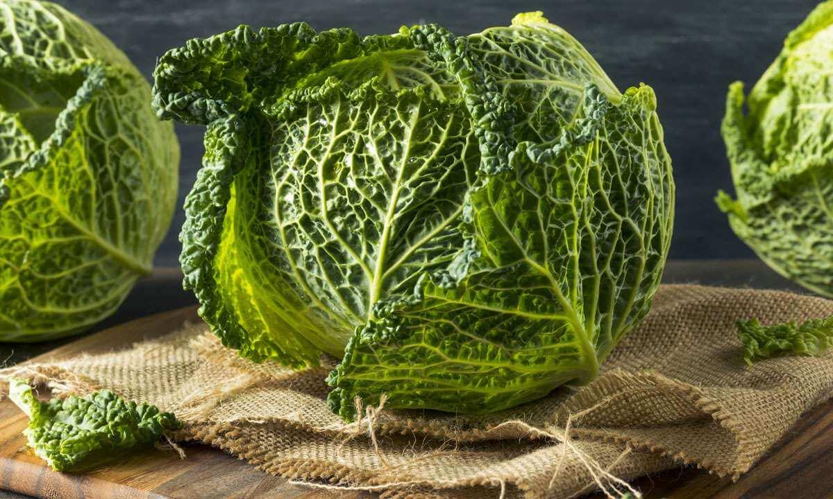 Чем полезна савойская капуста, калорийность, вред, видео