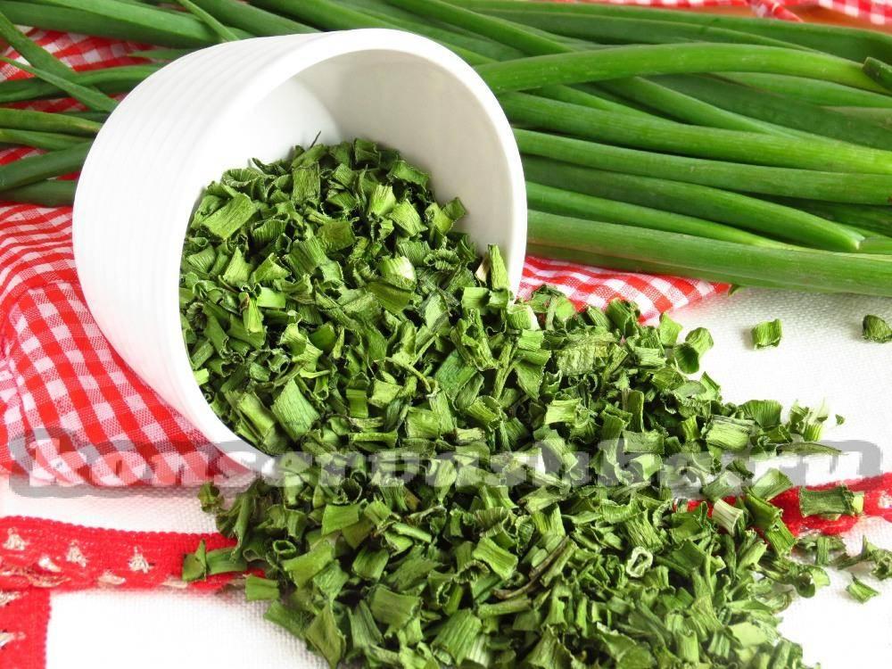 Зеленый лук: как сохранить перо свежим на зиму в домашних условиях?