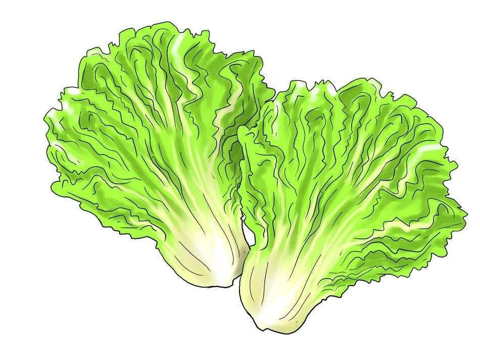 Ценная овощная культура — листовой салат, обсудим его пользу и возможный вред