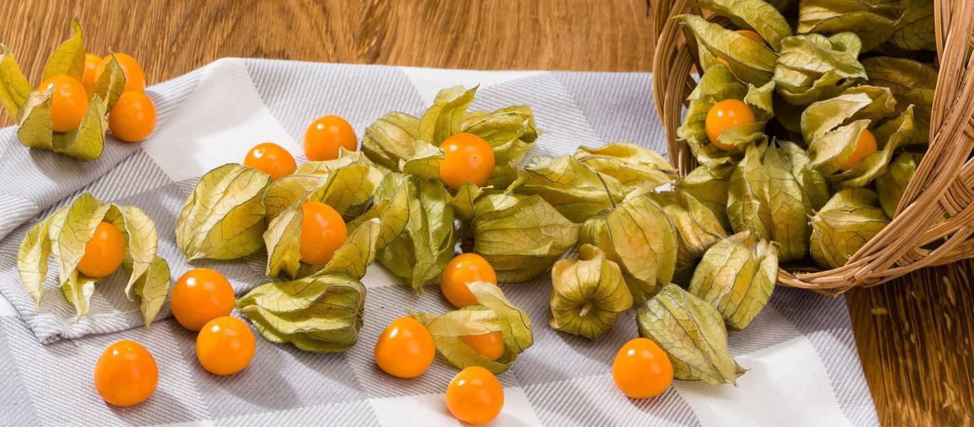 Физалис – польза и вред съедобного растения