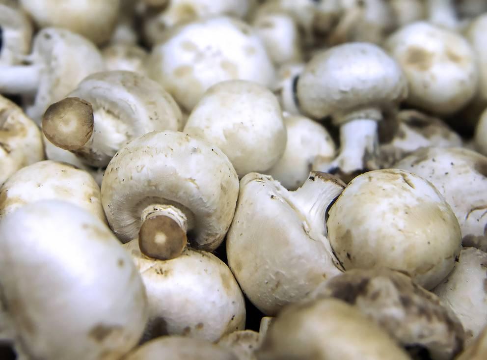 Шампиньоны – бжу, калорийность, польза и вред грибов для организма