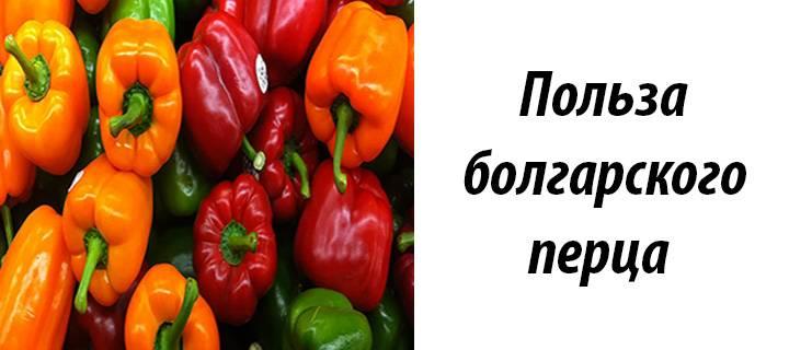 Болгарский перец – польза и вред разноцветной паприки