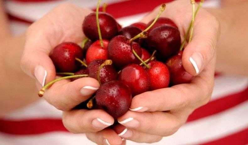 Черешня: польза и вред при заболеваниях, применение для похудения