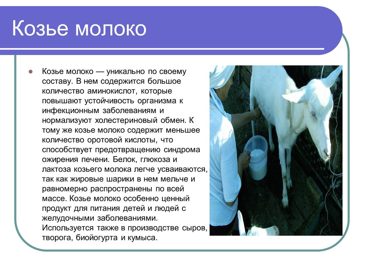 Глава 4 как правильно принимать козье молоко