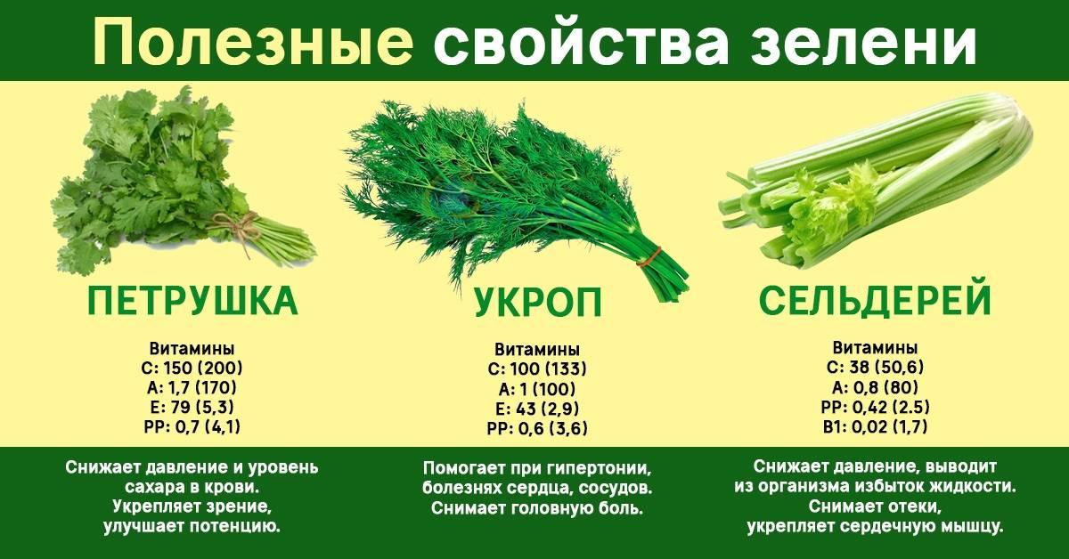 Удивительная польза обычной огородной травки: а вы уже успели заготовить на зиму побольше укропа?