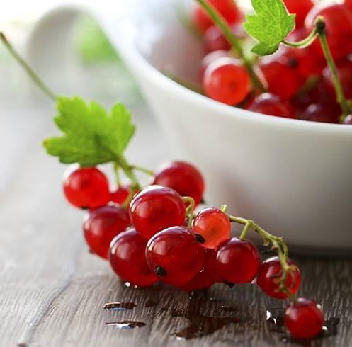 Польза и вред ягод и листьев смородины для организма
