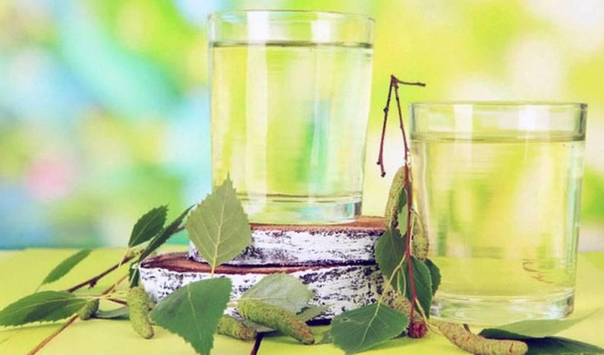Чем полезен березовый сок для организма и как правильно его собирать?