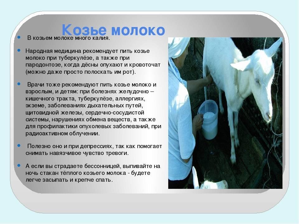 Козье молоко польза и вред для пожилых