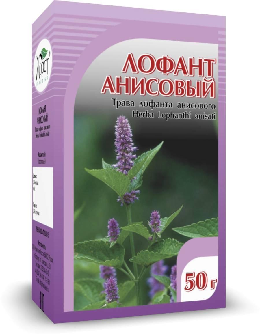 Полезные свойства и противопоказания растения лофант, как применять