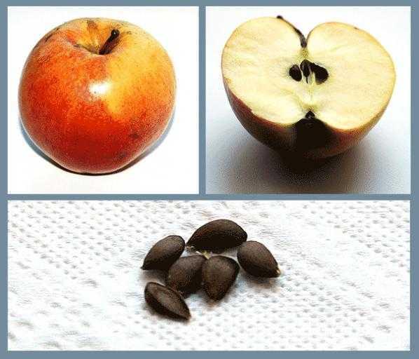 Запеченные яблоки для кормящей мамы