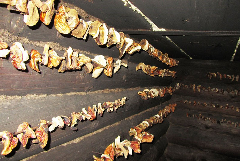 Как сушить грибы дома и в лесу: на ветке, на нитке или в духовке