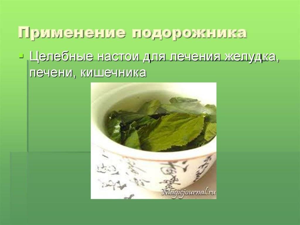 Лечебные свойства и противопоказания подорожника. применение семян, листьев и сока растения
