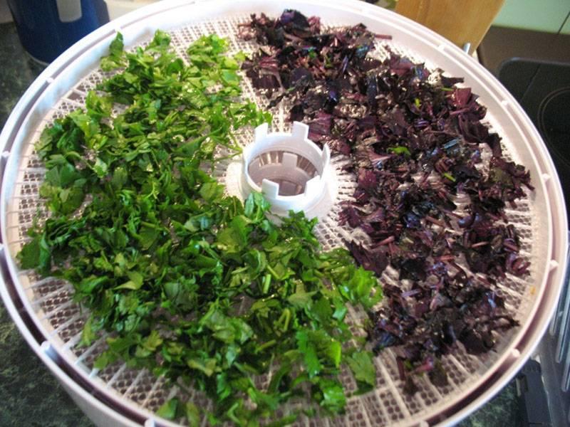 4 способа заморозить базилик на зиму: сохраняем вкус и пользу