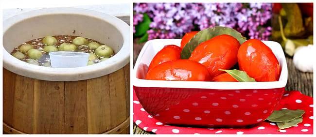 Можно ли есть зеленые помидоры: польза и вред для организма человека в свежем и соленом виде