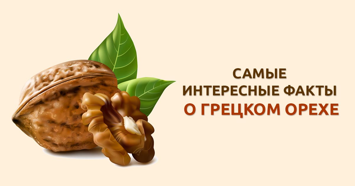 Самые полезные для организма человека орехи в мире. химический состав и рейтинг лучших