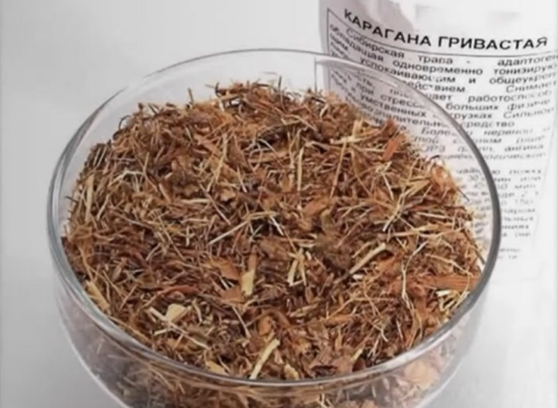 Карагана гривастая: лечебные свойства и противопоказания