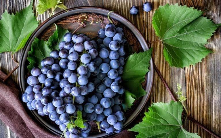 Виноградные листья польза и вред для организма