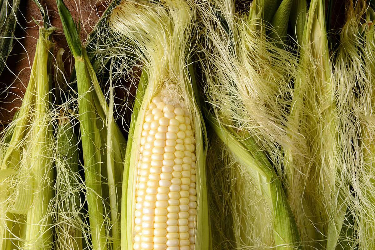 Лечебные свойства и противопоказания кукурузных рыльцев