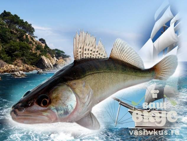Судак: польза и вред рыбы