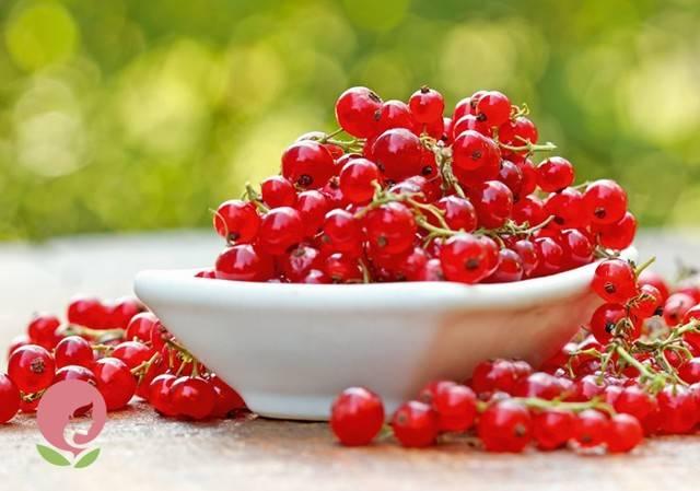 Польза красной смородины для организма человека: какие болезни вылечит и предотвратит