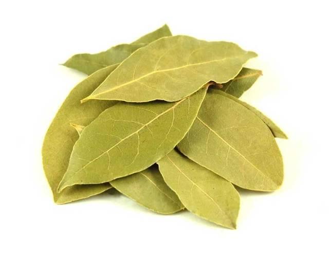 Лавровый лист — его лечебные свойства, польза и вред