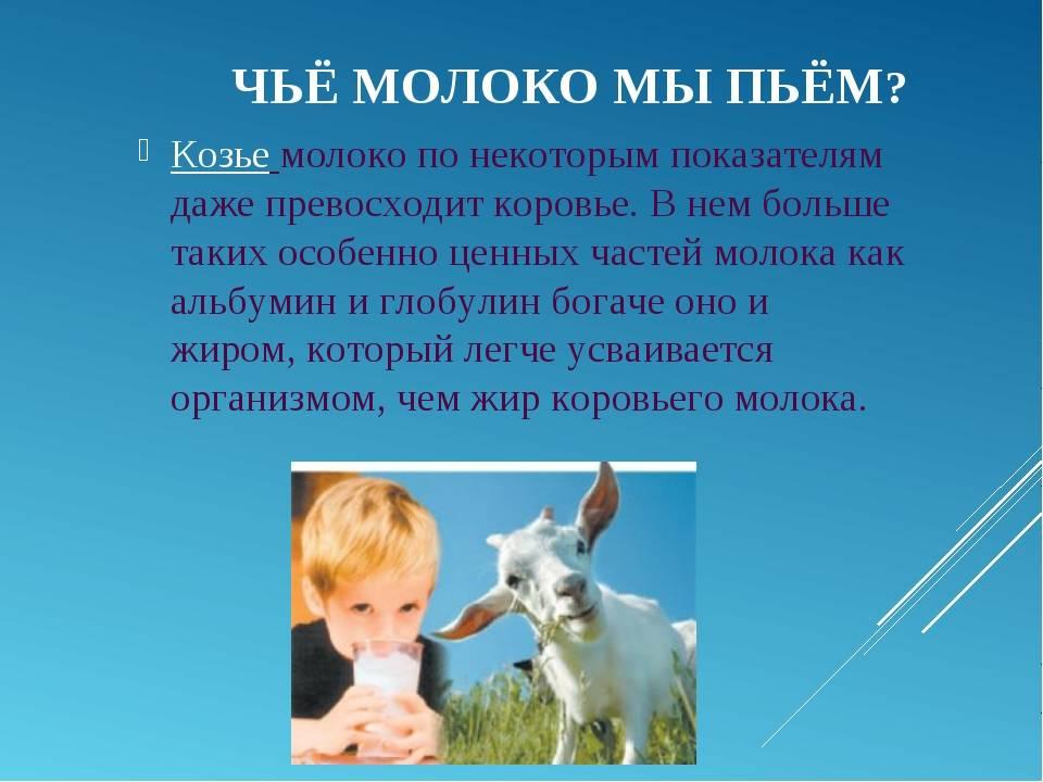 Польза и вред козьего молока для организма