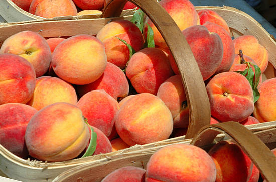 Польза и вред персиков