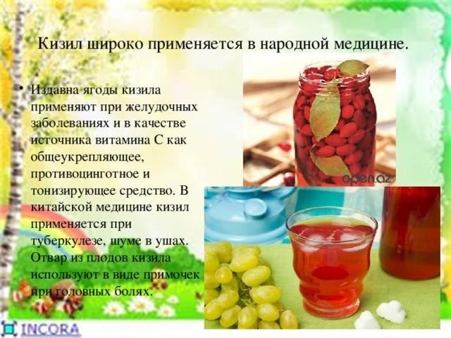 Кизил: польза и вред плодов для нашего здоровья