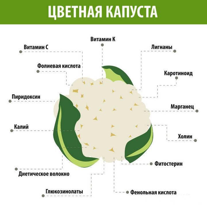 Польза и вред цветной капусты для здоровья организма