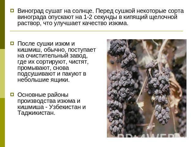 Виноград: польза и вред для организма женщины и мужчины