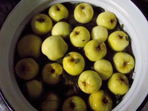 О пользе и вреде моченых яблок