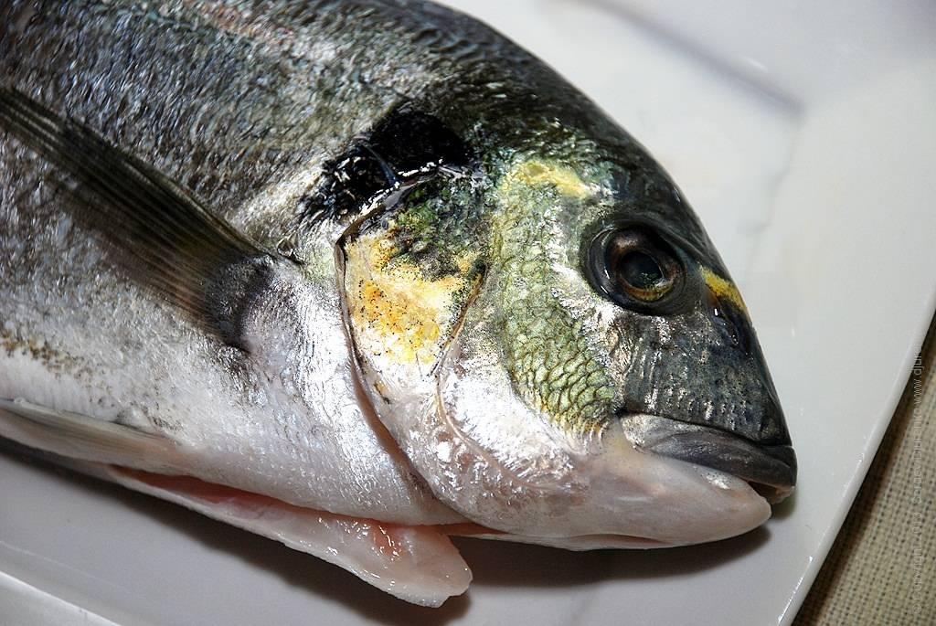 Что собой представляет рыба дорадо и как ее готовить